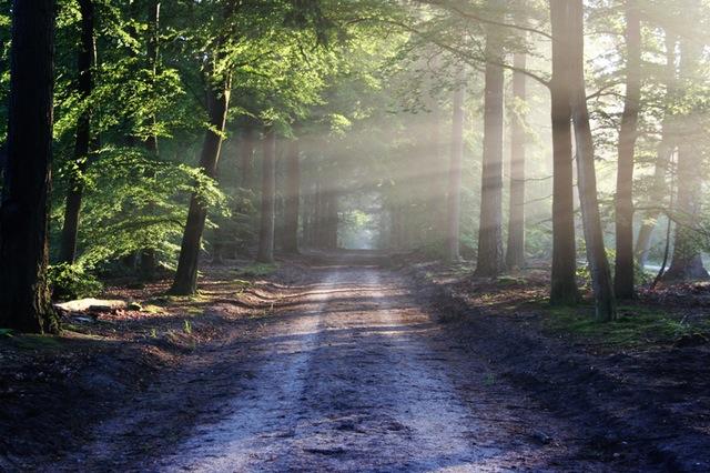 Sonniger Pfad durch den Wald